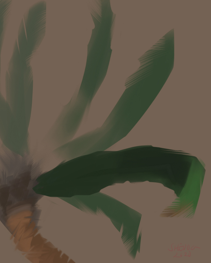 Drawing. Multiple green palm fronds spans out from the top of a light brown palm trunk.