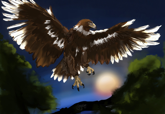 Drawing of an white and brown eagle in flight and spreading its wings over a tree trunk. The sun sets in the background.
